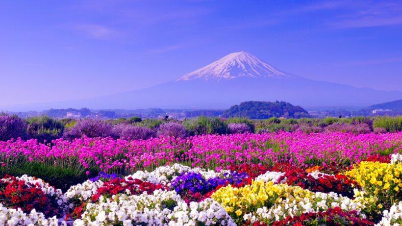 hình nền hoa mùa xuân tuyệt đẹp