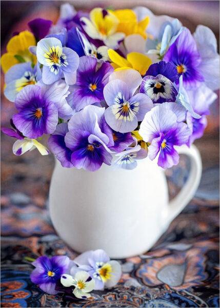 Hình nền hoa Pansy đẹp cho điện thoại iphone