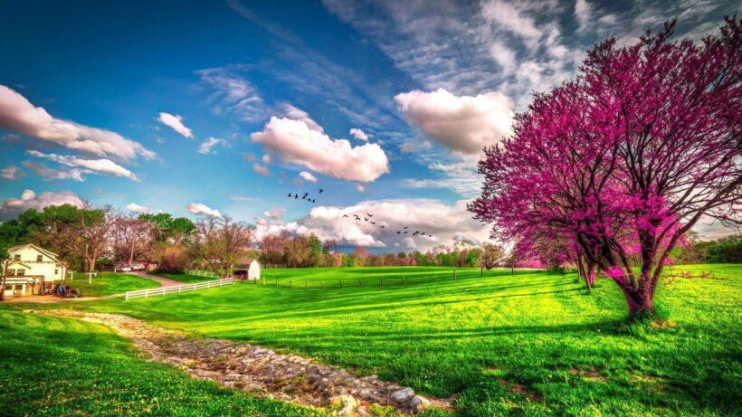 hình nền mùa xuân tuyệt đẹp