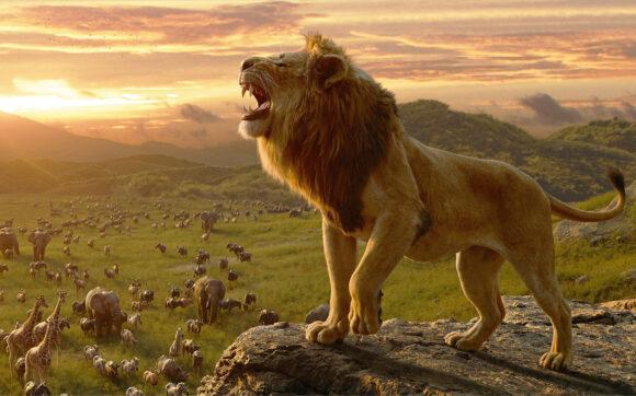 hình nền sư tử đẹp nhất