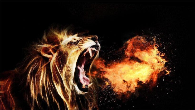 hình nền sư tử lửa cho desktop