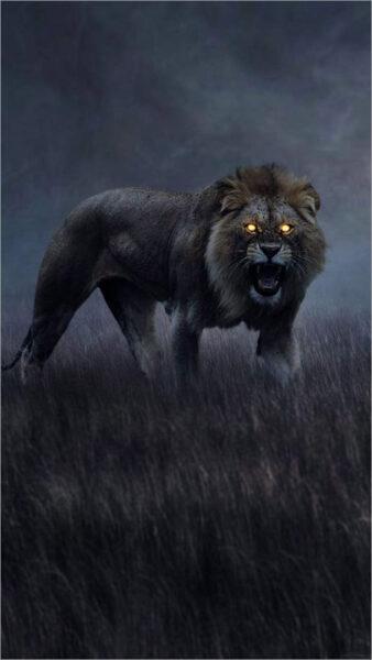 hình nền sư tử trong bóng đêm cho samsung