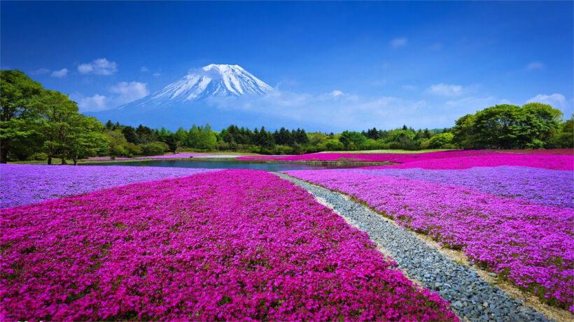 hình nền thiên nhiên hoa mùa xuân đẹp