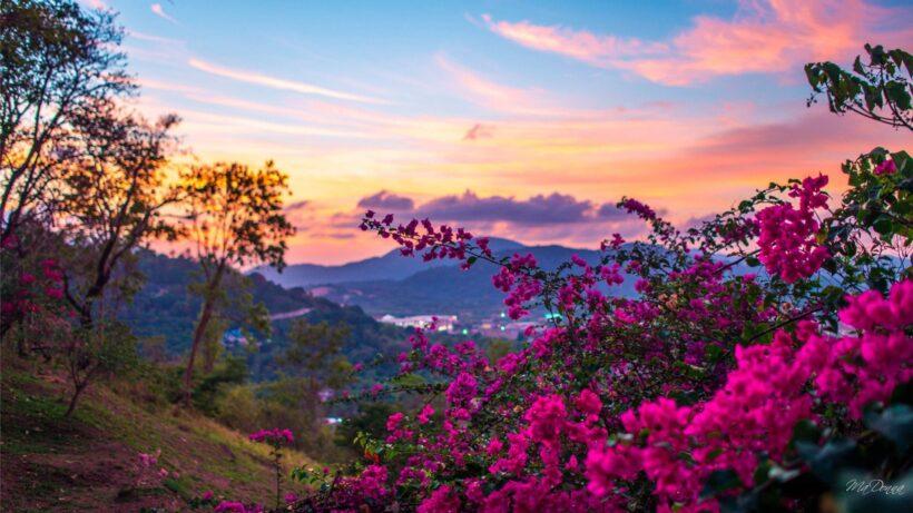 hình nền thiên nhiên mùa xuân hoa nở