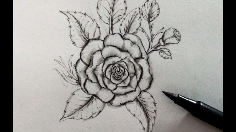 Hình vẽ đóa hoa hồng bằng bút chì