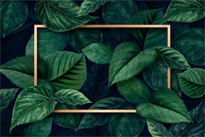 khung background xanh lá đẹp cho thiết kế