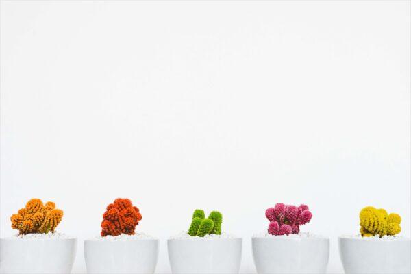 nền background trắng và các cây bonsai