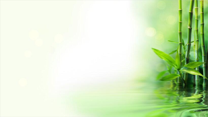 Bamboo Reflection HD Desktop Background