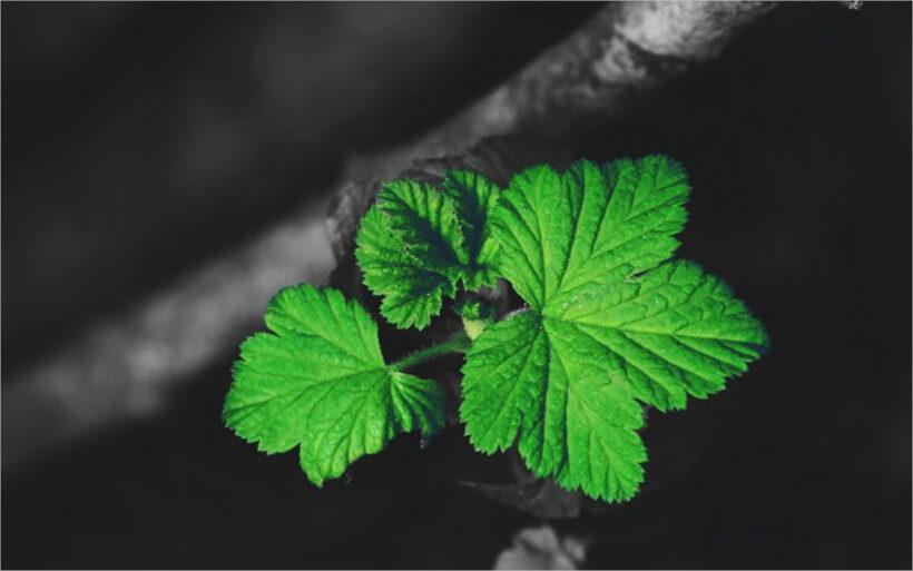 Tổng hợp background xanh lá full-HD đẹp (10)