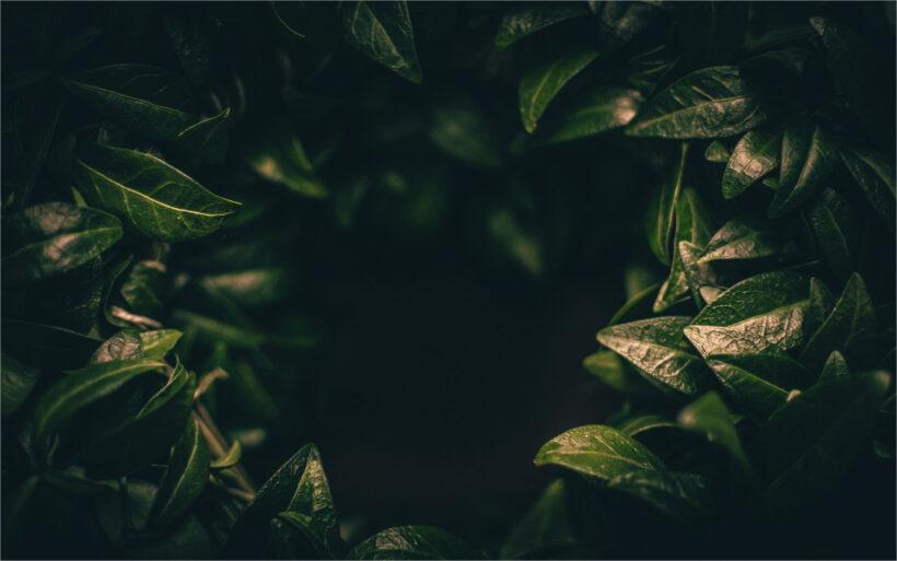 Tổng hợp background xanh lá full-HD đẹp (12)
