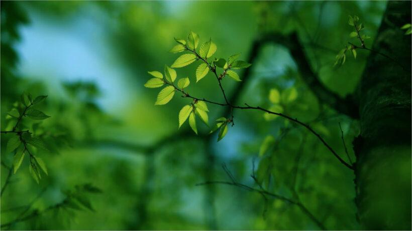 Tổng hợp background xanh lá full-HD đẹp (6)