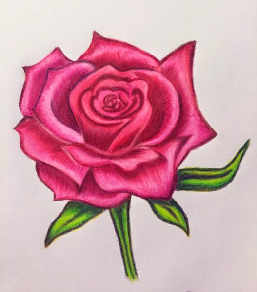 tranh vẽ hoa hồng đỏ bằng bút chì màu tuyệt đẹp