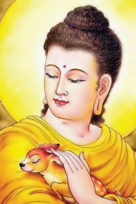 Tuyển tập ảnh Phật Thích Ca Mâu Ni (11)
