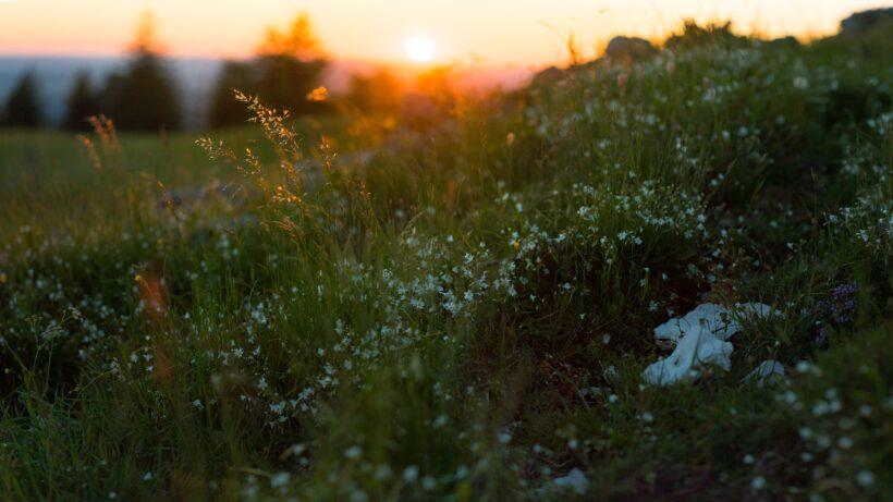 Ảnh nền 4K thiên nhiên hoàng hôn và cỏ