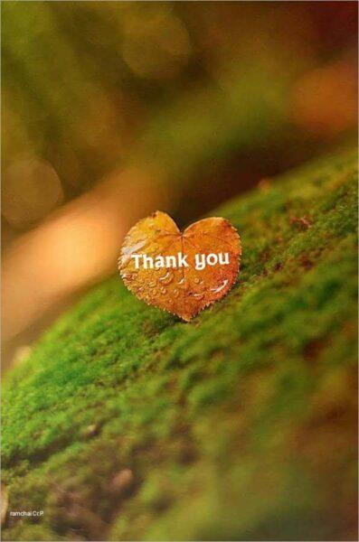 hình ảnh cảm ơn đẹp ý nghĩa nhất (2)