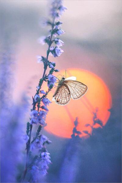 hình ảnh con bướm cách điệu