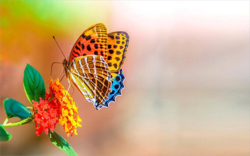 hình ảnh con bướm đang bay đẹp