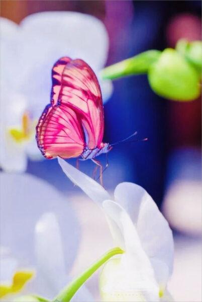 hình ảnh con bướm đẹp nhất (13)