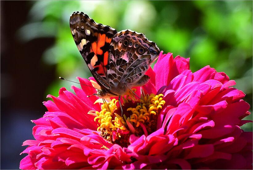 hình ảnh con bướm đẹp nhất