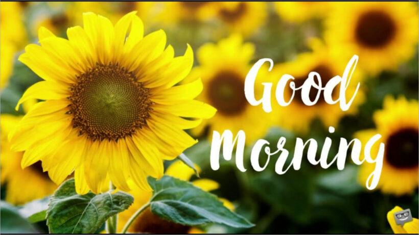 hình ảnh hoa chào ngày mới đẹp nhất (2)