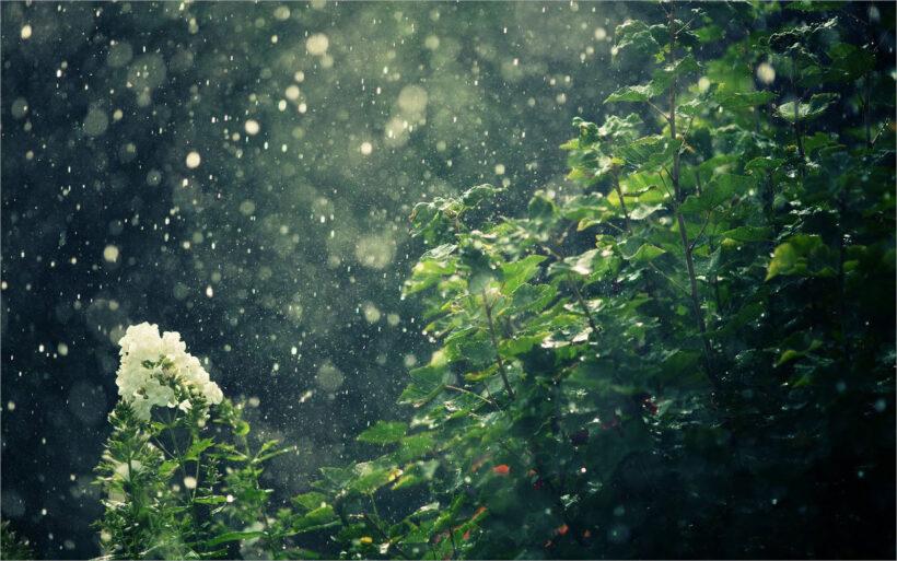 hình ảnh mưa đầu mùa