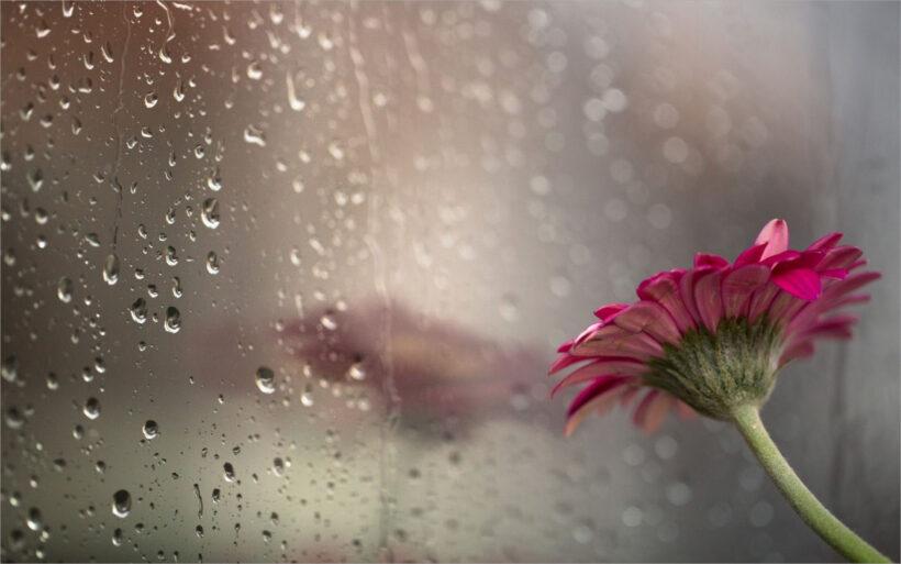 hình ảnh mưa đẹp nhất (12)