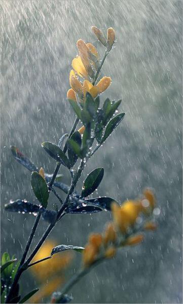 hình ảnh mưa đẹp nhất (8)