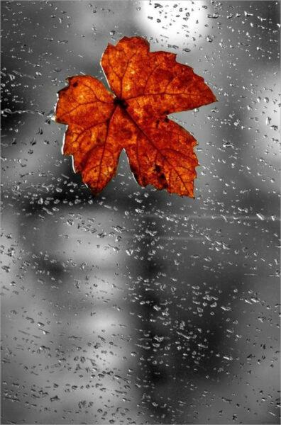 hình ảnh mưa rơi buồn đẹp nhất (9)