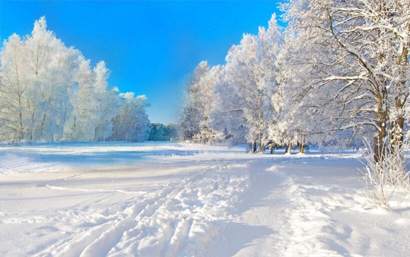 Hình nền 4k cho laptop rừng tuyết mùa đông