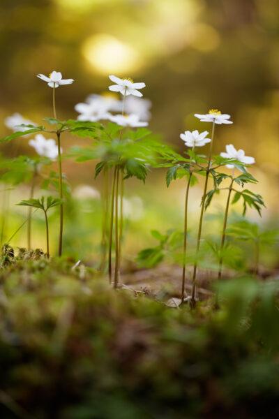 Hình nền điện thoại thiên nhiên mầm hoa