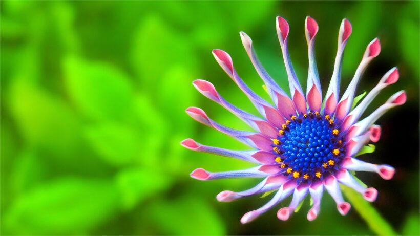 Hình nền laptop 4K bông hoa