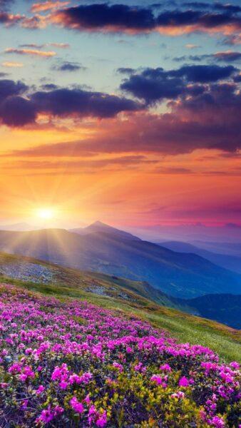 hình nền thiên nhiên hoa trên núi cho điện thoại