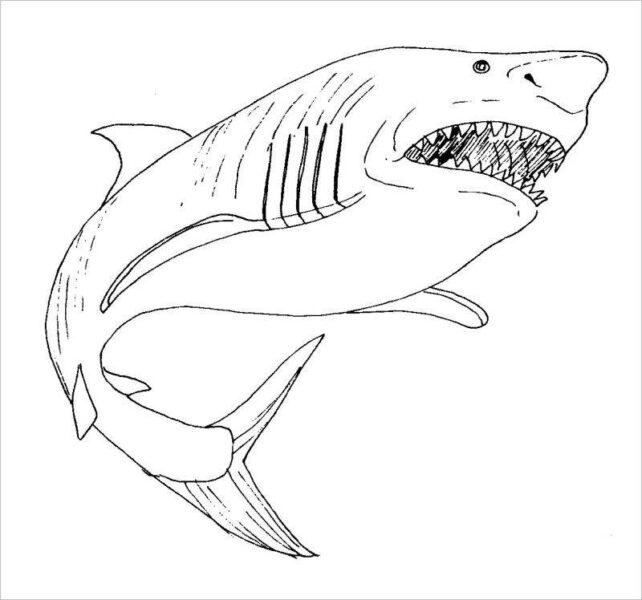 Hình tập tô con cá mập cho bé tô màu (5)