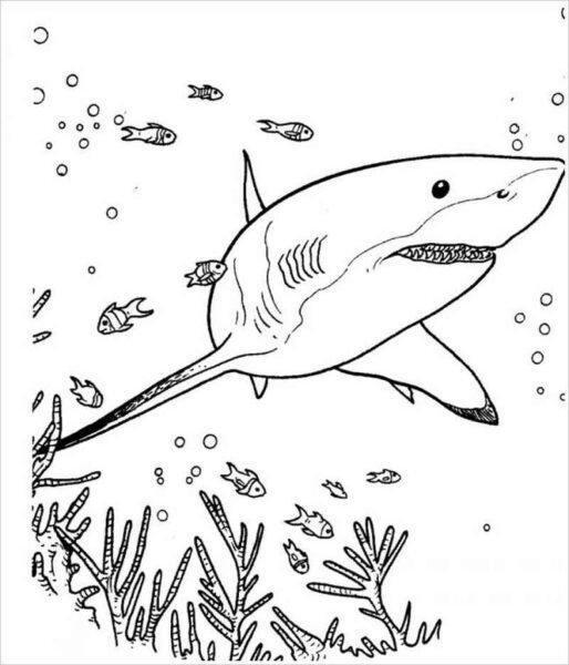 Hình tập tô con cá mập cho bé tô màu (6)