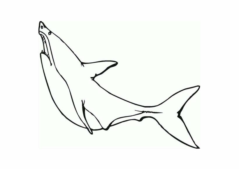 Hình tô màu cá mập đẹp nhất cho bé tập tô (1)