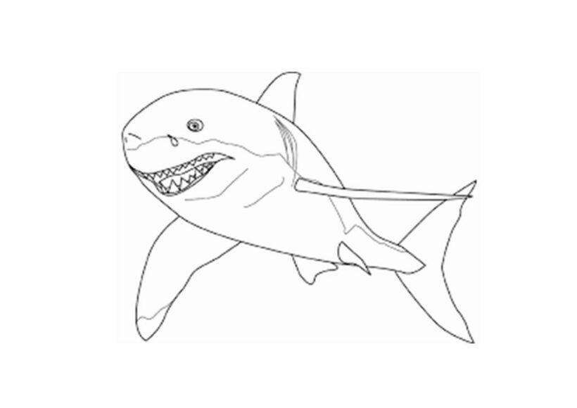 Hình tô màu cá mập đẹp nhất cho bé tập tô (2)