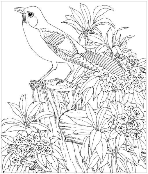 Hình tô màu con chim dễ thương cho bé tập tô (5)