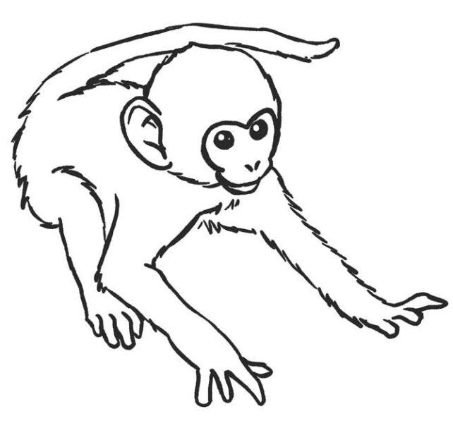 Hình tô màu con khỉ dễ thương cho bé tập tô (2)
