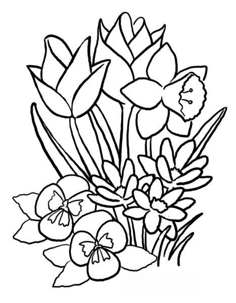 Hình vẽ bông hoa đẹp cho bé tô màu (3)