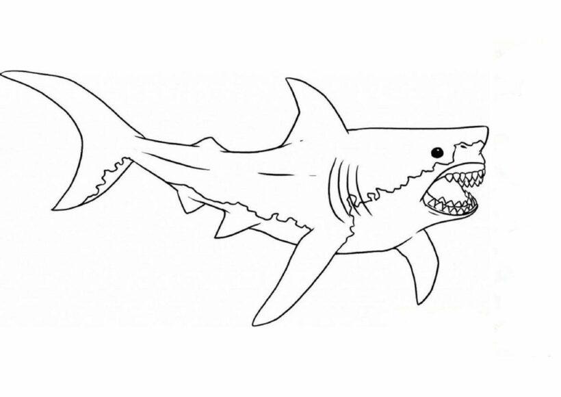 Hình vẽ chưa tô màu cá mập đẹp cho bé tập tô (1)