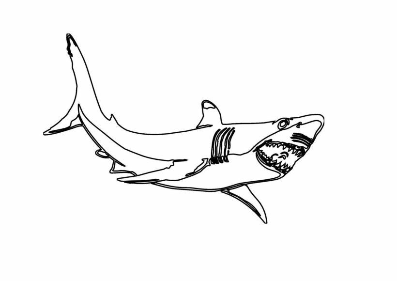 Hình vẽ chưa tô màu cá mập đẹp cho bé tập tô (2)