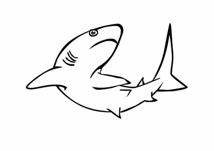 Hình vẽ chưa tô màu cá mập đẹp cho bé tập tô (6)