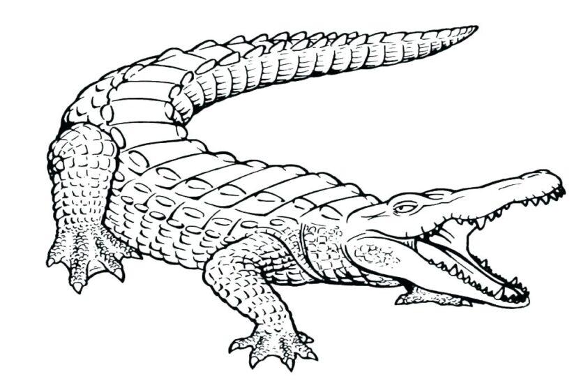 Hình vẽ chưa tô màu cá sấu cho bé tập tô (4)