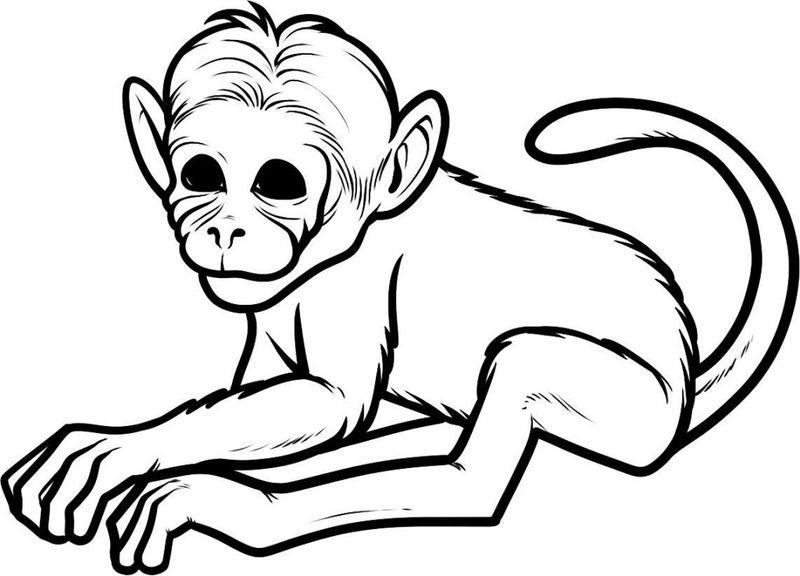 Hình vẽ con khỉ đẹp