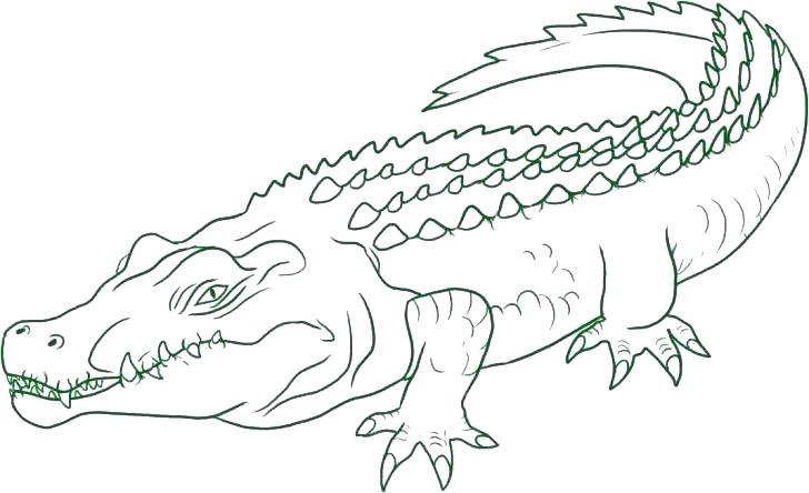 Hình vẽ đen trắng cá sấu cho bé tô màu (2)