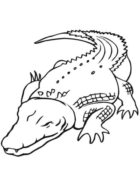 Hình vẽ đen trắng cá sấu cho bé tô màu (6)