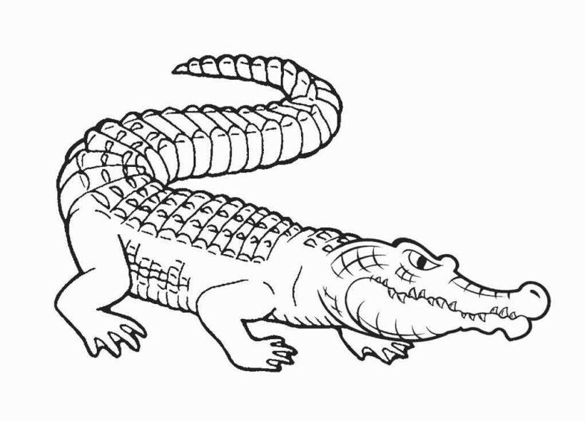 Hình vẽ đen trắng cá sấu cho bé tô màu (7)