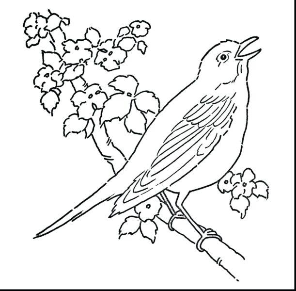 Hình vẽ đen trắng con chim cho bé tô màu (5)