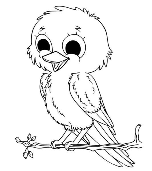 Hình vẽ đen trắng con chim cho bé tô màu (8)