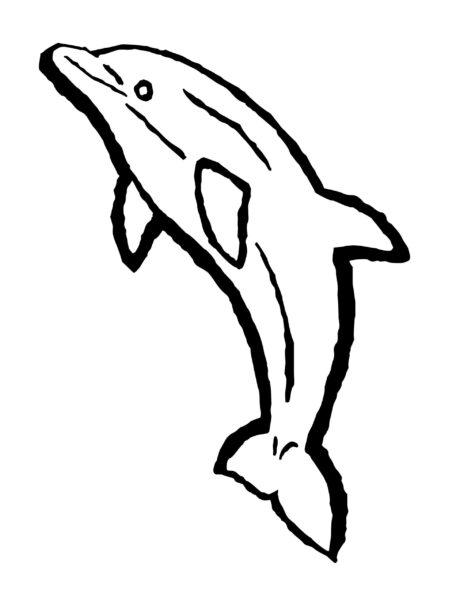 Những tranh tô màu cá heo đẹp nhất cho bé tập tô (3)